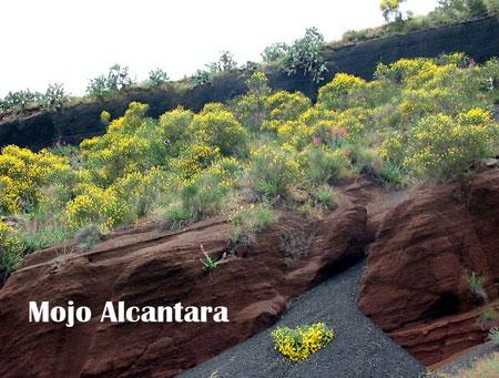 Mojo-Alcantara1